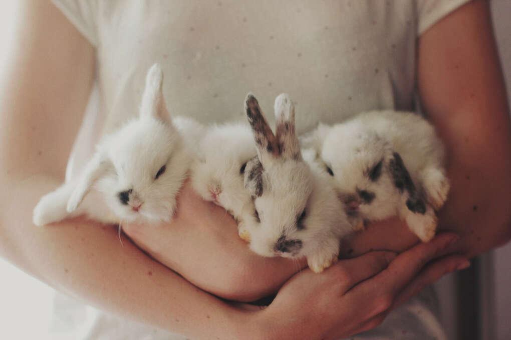 держать охапку кроликов