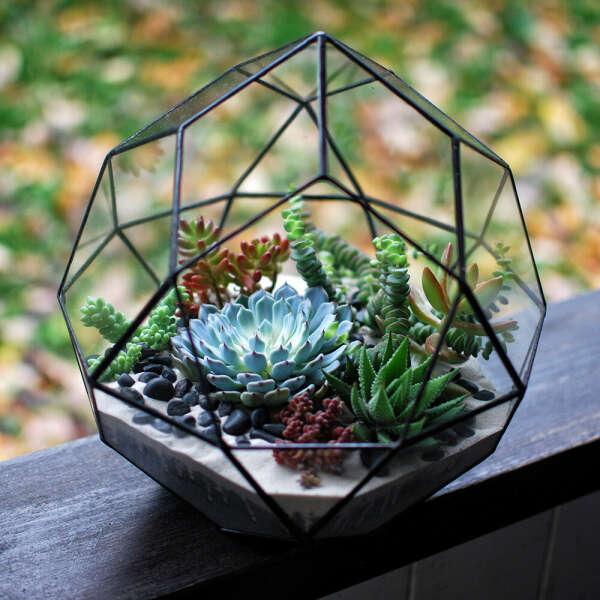 Флорариум с суккулентами в вазе геометрической формы