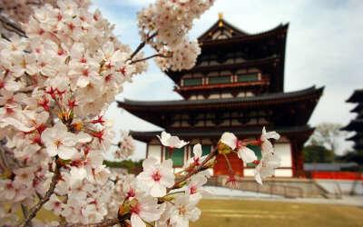 Хочу в Японию