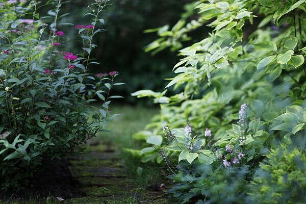 Сделать из дачи волшебный сад