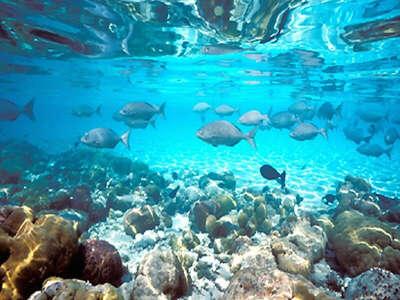 Хочу побывать под водой и посмотреть подводный мир)))