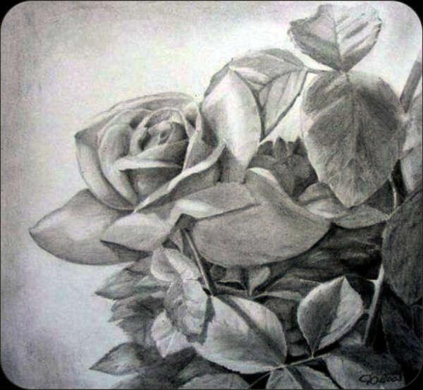 Научиться рисовать карандашом