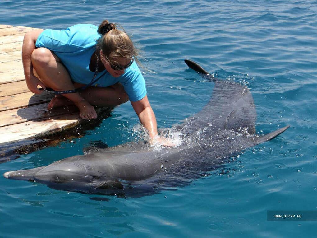 Побывать на Дельфиньем рифе (Эйлат)