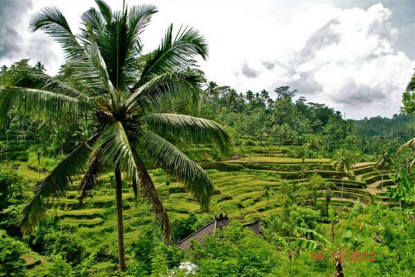 На Бали!