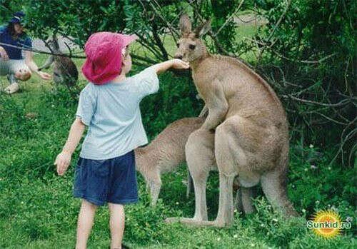 Покормить кенгуру