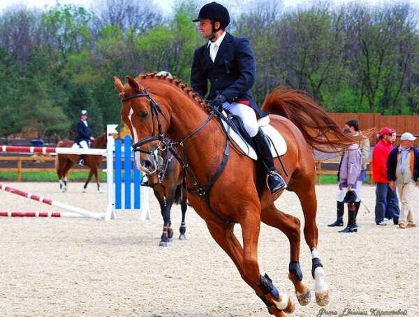 Заниматься конным спортом