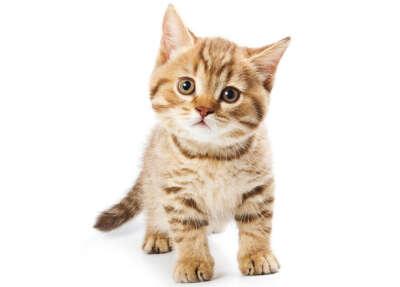 Взять котика из приюта
