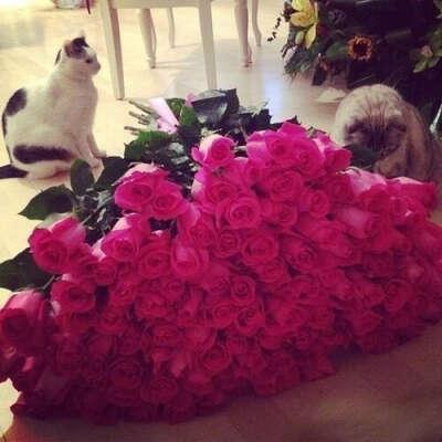 Получить 101 розу