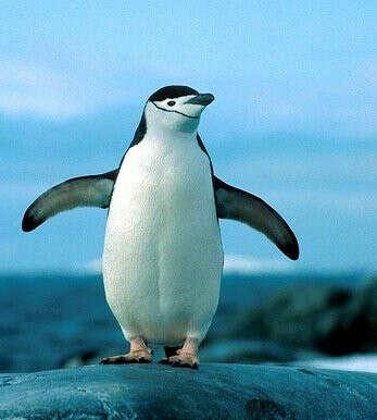 Увидеть пингвинов