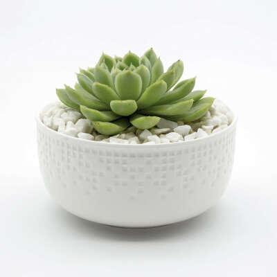 HAPPY LITTLE SUCCULENTS Succulent Bowl