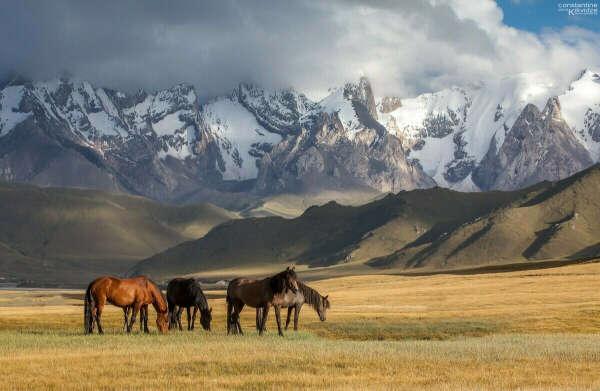 Посетить Казахстан