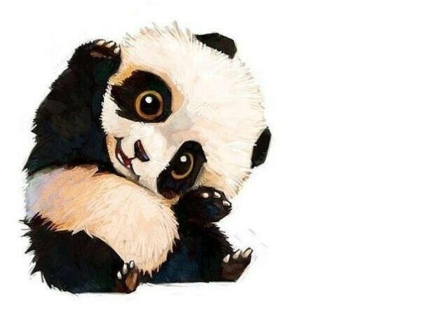 Домашнюю панду