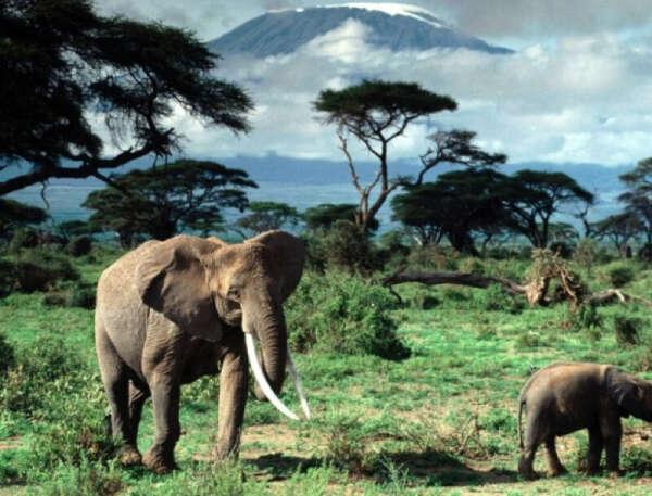 Побывать в Африке на сафари