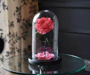 Долговечная роза