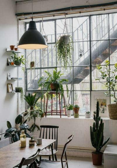 Много комнатных растений