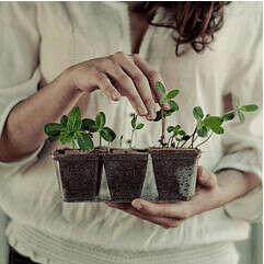 Завести комнатное растение