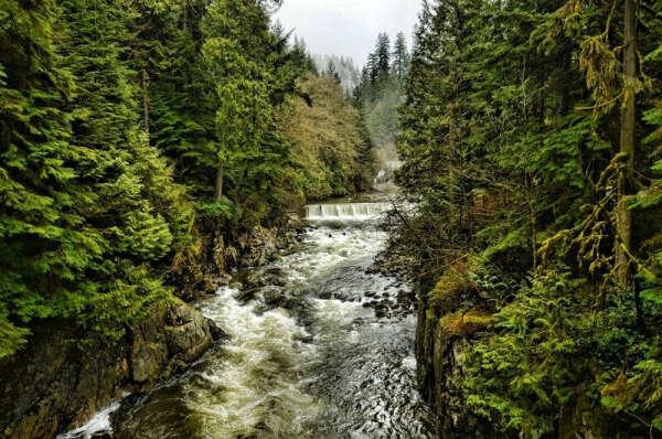 Побывать в лесах Ванкувера