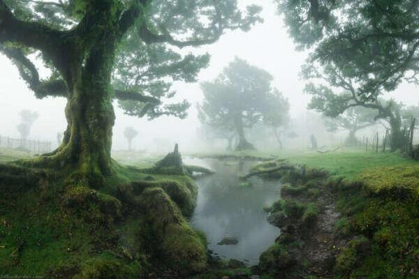 Посетить облачный лес Фанал на Мадейре
