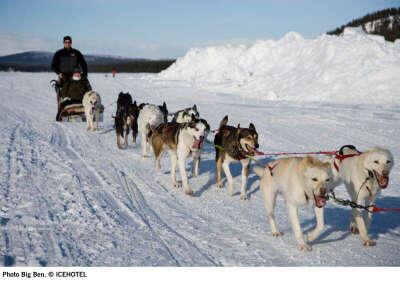 Катание на собачьей упряжке в Щвеции