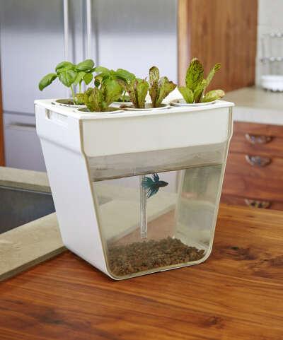 Акваферма. Рыбка кормит растения. Растения очищают аквариум!