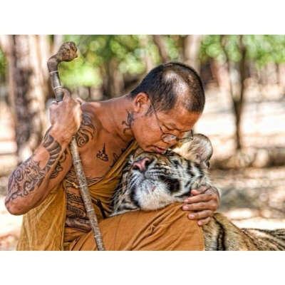 Быть волонтером в храме тигров