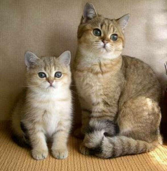 Открыть питомник для котиков