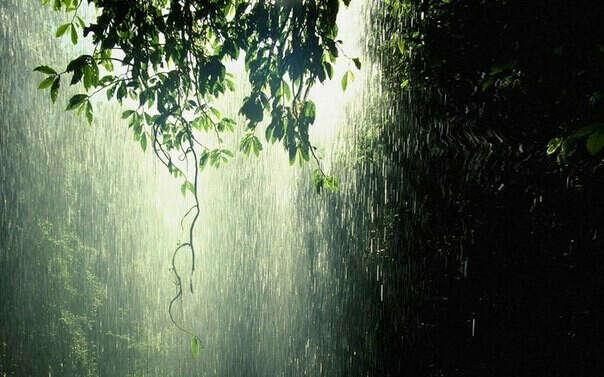 Хочу погулять под дождем