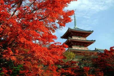 Побывать в Японии в момидзи