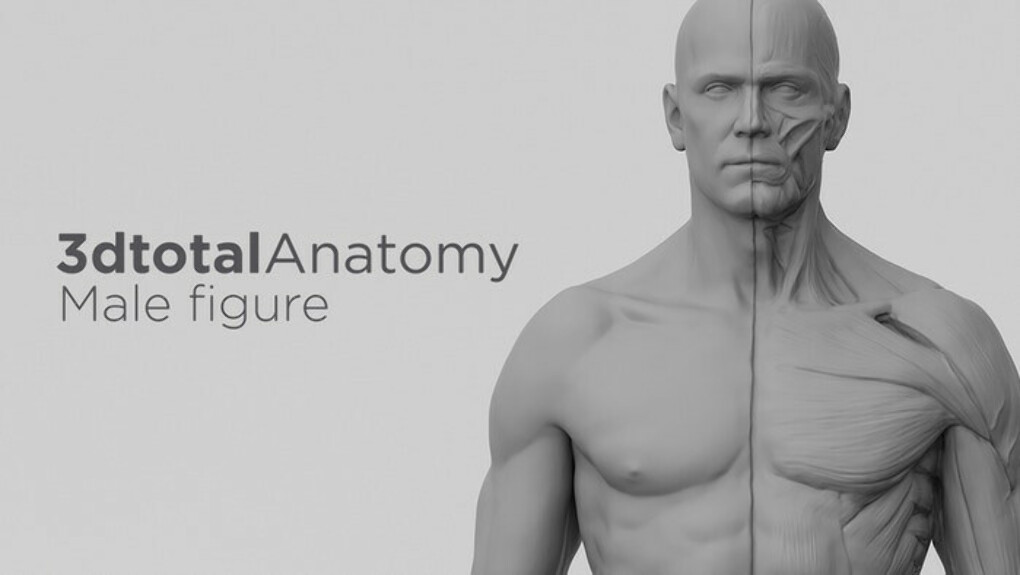 Фигурка 3dtotal Anatomy: male figure