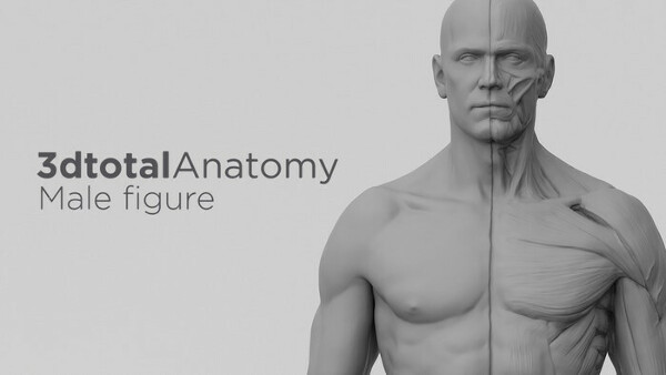 Фигурка 3dtotal Anatomy: male figure