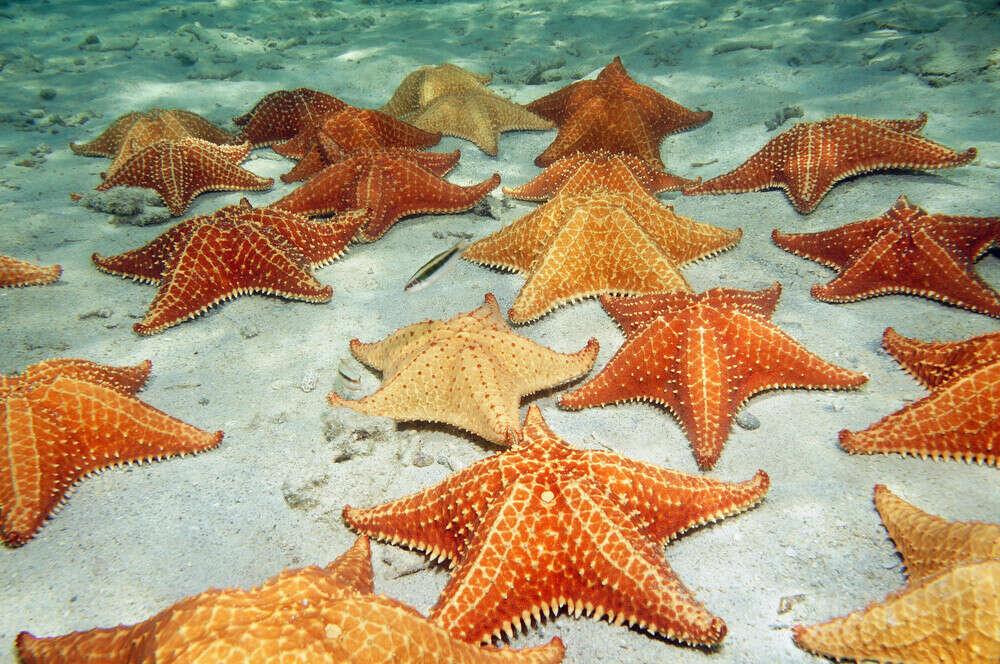 увидеть морские звезды