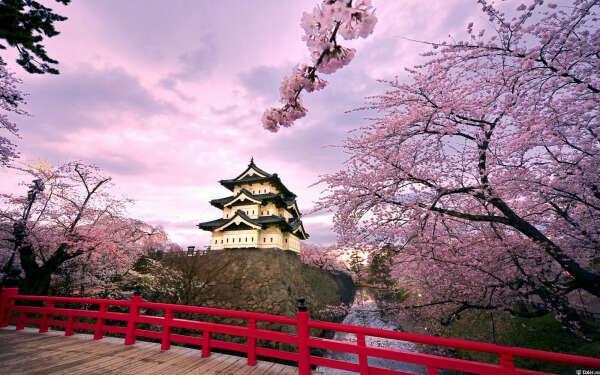 Побывать в Японии во время цветения сакуры