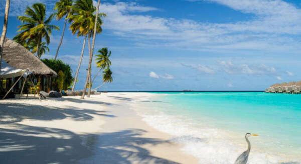 Отдых на Мальдивах, резорт Куреду, Сайлагун