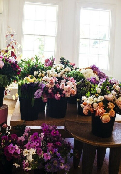 Много комнатных цветов