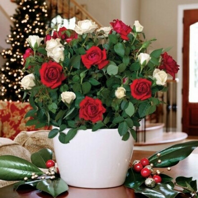 Роза смешанная