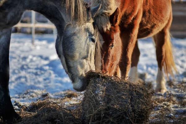 Катание на лошадях в Лаишево