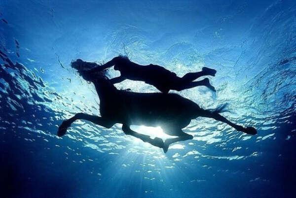 Поплавать с лошадью