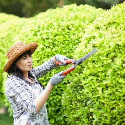попробовать посадить овощи, цветы и деревья (BUILD my own GARDEN)
