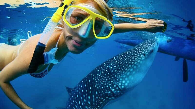 Поплавать с китовыми акулами на Филиппинах