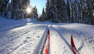 Покататься на лыжах