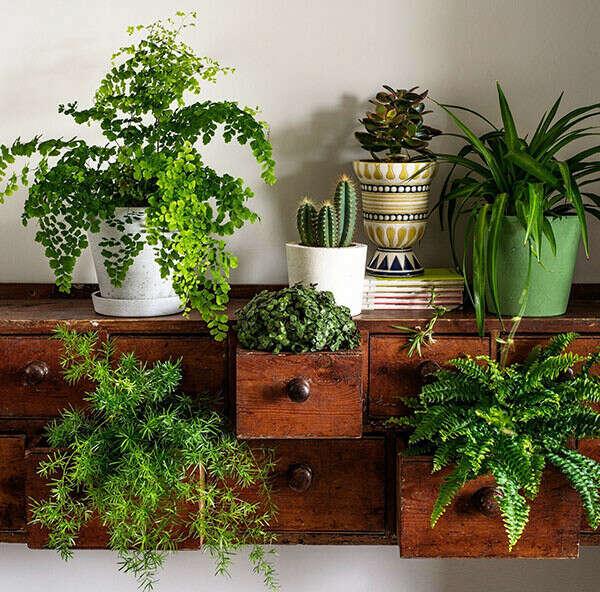 много домашних растений