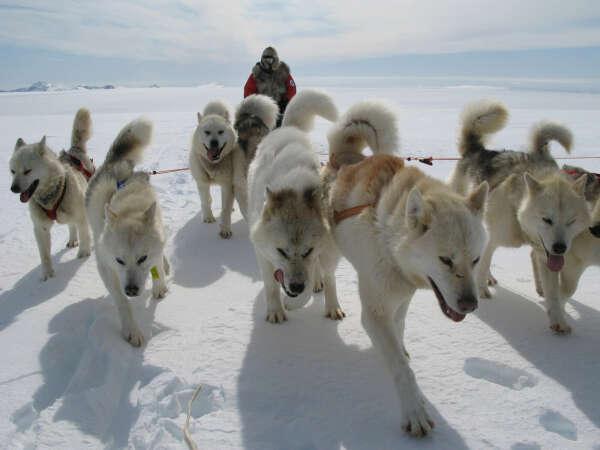 Покататься на собачьих упряжках