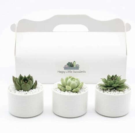Three Little Mini Succulents