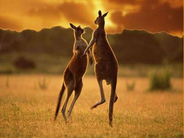 В Австралию, Новую Зеландию, Мадагаскар - надолго!