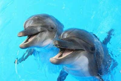 Плавание с дельфинамм