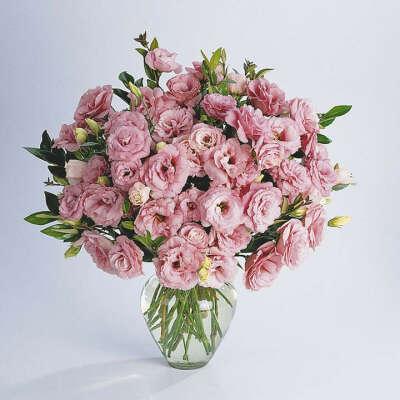 Розовые, белые, фиолетовые эустомы