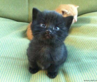 Котёнок (чёрный :)