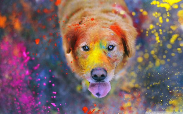 хочу наполнить этот мир яркими красками