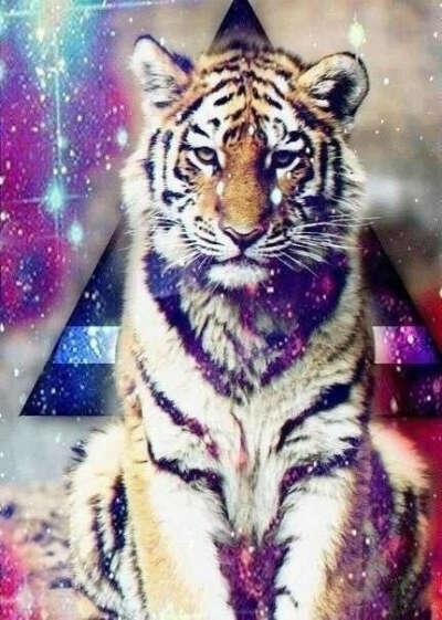 Ручного тигра