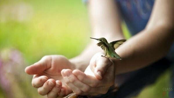 Покормить колибри с рук